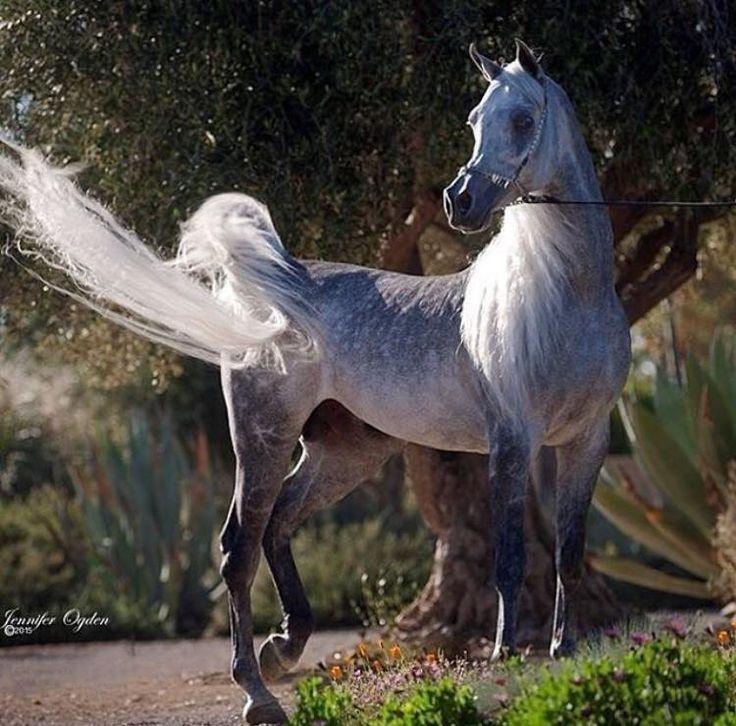 картинки конь танцует этом