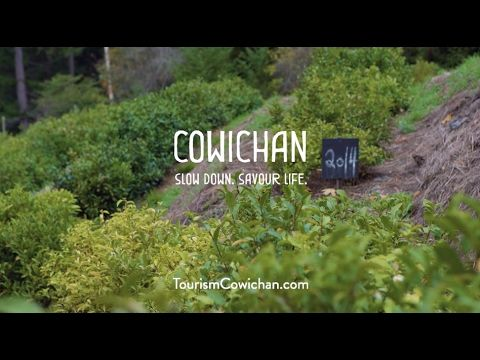 Tourism Cowichan - Westholme Tea Farm - YouTube