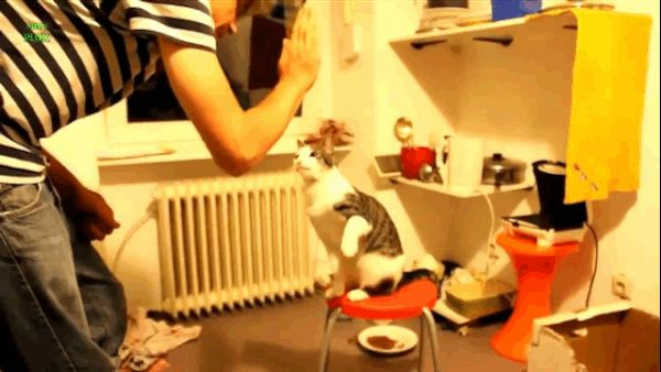Hey, high fiving cats, you're pretty great. | This Video Of Cats Giving High Fives Will Make Everything Better