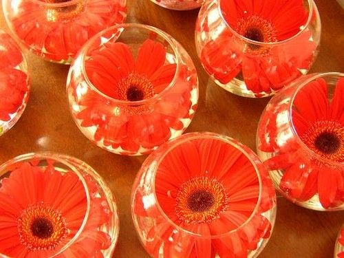 Cannot even describe how much I love this--miniature versions of my wedding centerpieces!  Perfect for a party or to create whatever color look you want!  Gerber daisies are my absolute fav!