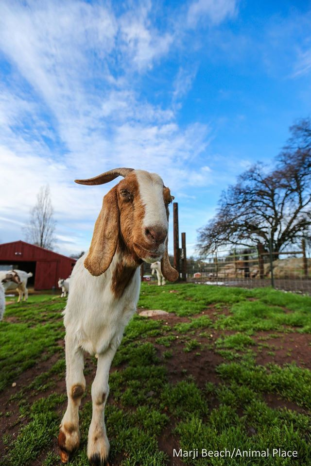 how to start a goat dairy farm in georgia