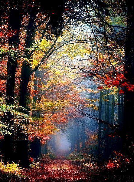 incredible autumn.