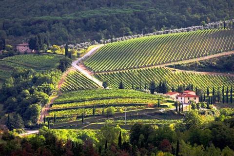 Chianti Italy Vineyard