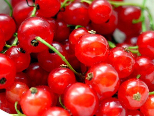 8 Amazing Health Benefits Of Currant Fruit