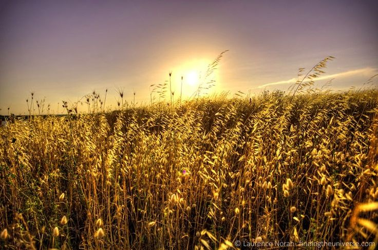 Wheat field sunset. Brindisi, Italy #brimd