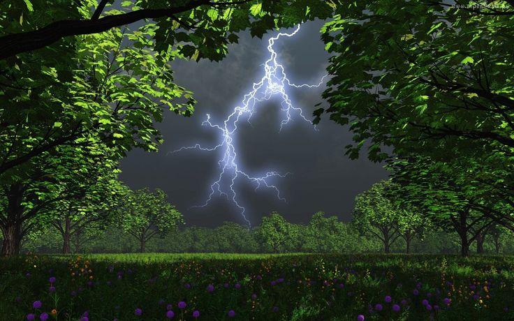 Burza, Drzewa, Kwiaty