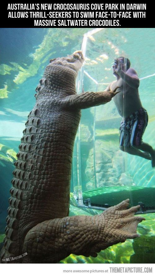 Swimming face-to-face with massive crocodiles, this might be the scariest thing i've seen. I like crocs but they scare me more than sharks. I would probably do this... but it would be way scary!