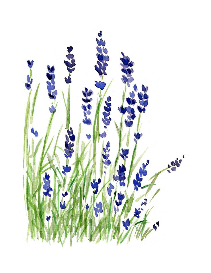 Lavender plant print of original watercolor painting ,purple and green, Plants, Botanical herb, February birthday, mothers day ,. $21.00, via Etsy.