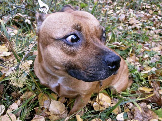 25 Best Dog Body Language Images On Pinterest Dog Stuff