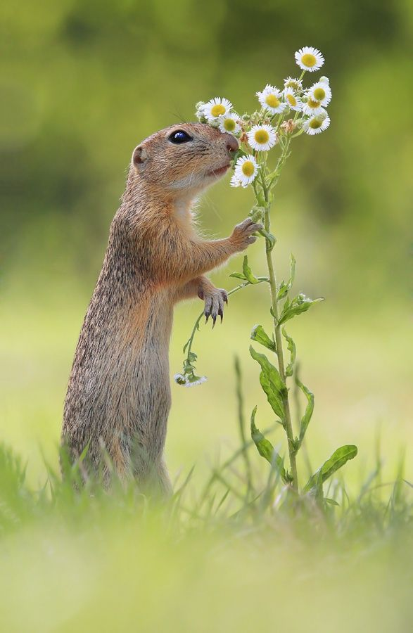 Deep Breath by Julian Rad Always good to stop, sniff the flowers, and enjoy life like this little guy!