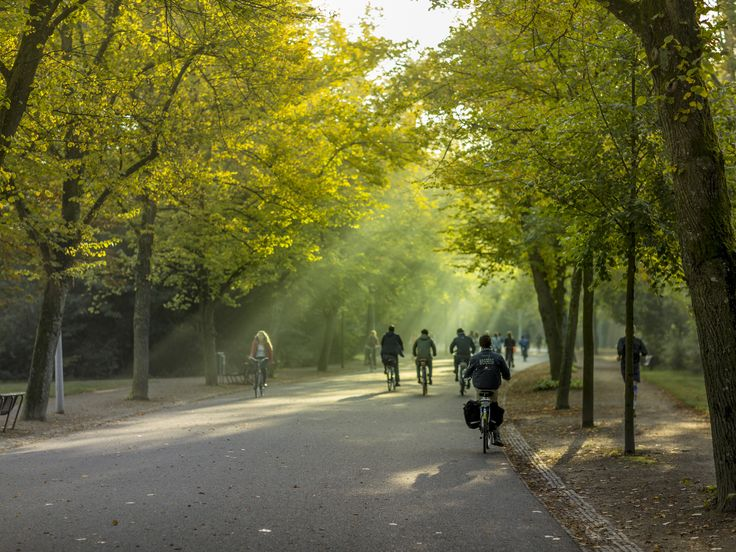 Head to the Central Park of Amsterdam to be as active—or lazy—as you'd like.