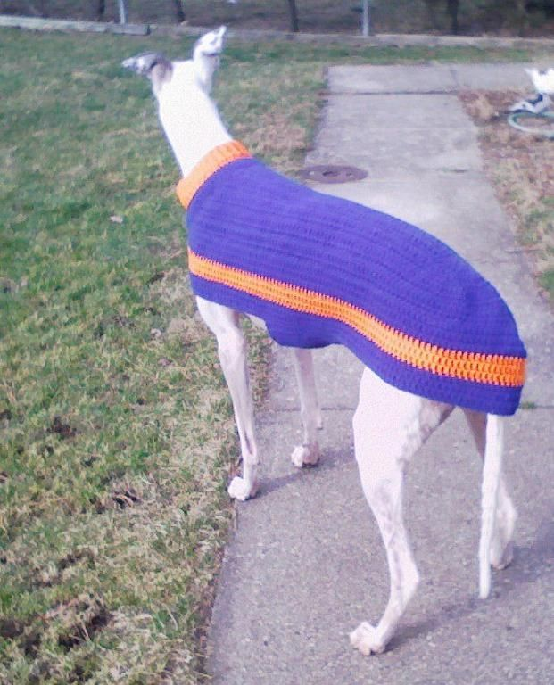 Greyhound Coat Knitting Pattern Free : Best images about knitted dog sweaters on pinterest