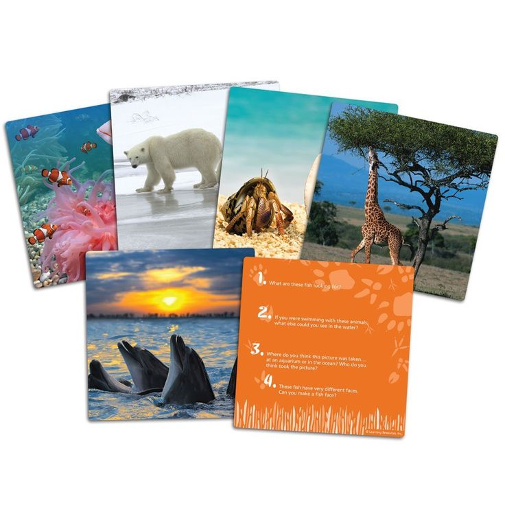 Learning Resources Wild About Animals Snapshots Critical Thinking Photo Cards: Amazon.co.uk: Toys & Games