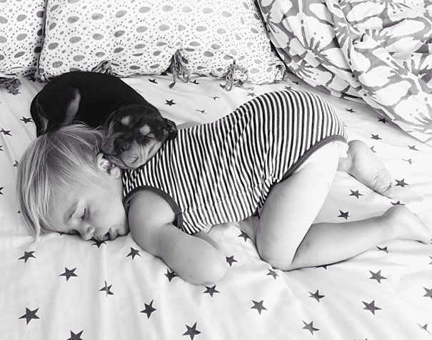 Toddler Takes Daily Naps With His Adopted 2-Month-Old Puppy