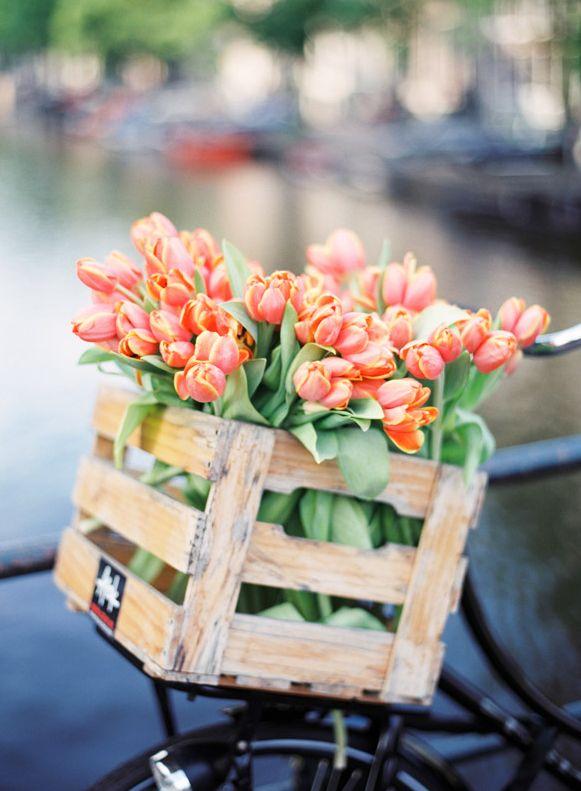 Tulipes ... ...réépinglé par Maurie Daboux ✺❃✿ ღ
