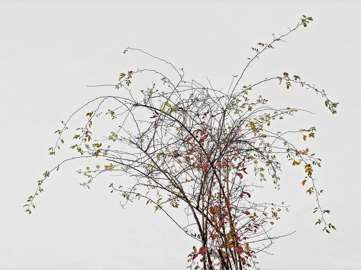 Ein Fotograf, der Bäume SIEHT - Peter von Felbert