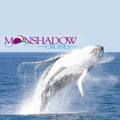 Moonshadow dolphin and whale watch cruises out of Nelsons Bay.