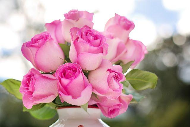 صور ورد مع عبارات جميلة للمناسبات السعيدة Beautiful Pink Roses Beautiful Pink Flowers Beautiful Rose Flowers