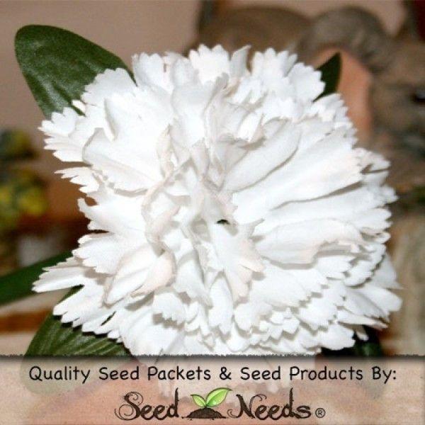 Grenadin White Carnation Seeds (Dianthus caryophyllus)