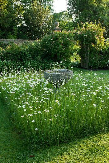 A block planting of white cosmos surrounds an antique urn and grass paths.
