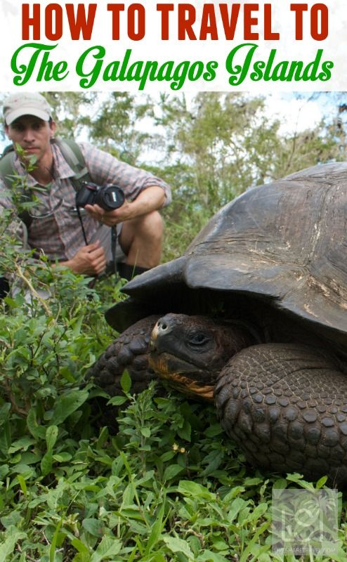 How to travel to The Galapagos Islands - travel tips to help you plan a trip to one of the lesser visited corners of the Earth. There's Galapagos Islands facts, including details of its wildlife, plus flights, tours, visas, currency and getting around. | pic: Brian Gratwicke