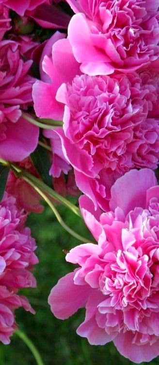 ZsaZsa Bellagio – Like No Other: All the pretty flowers. zsazsabellagio.blogspot.com