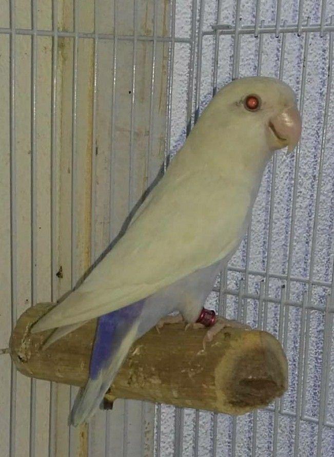 Pin By Leonardo Mendes Coelho Silva On Hewan Dan Peliharaan Beautiful Birds Colorful Parrots Pet Birds