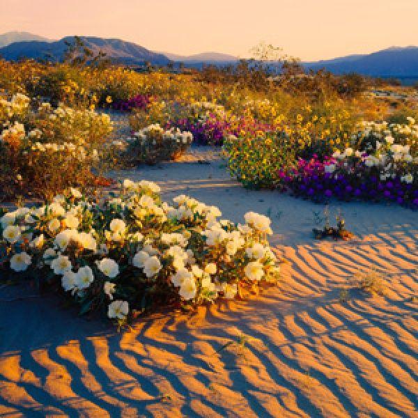 California's Borrego Springs on Foot