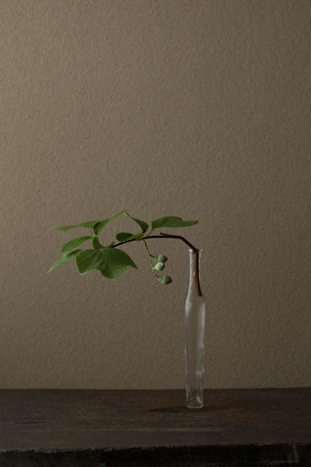 Toshiro Kawase Blume ein Tag