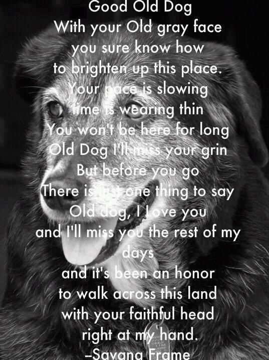 good old dog ~ oh my I actually cried.  Your pace is slowing, time is wearing thin, You won't be here for long - Old Dog I'll miss your grin.  But before you go there is one thing to say, Old Dog, I Love You and I'll miss you the rest of my days and it's been an honor to walk across this land with your faithful head right at my hand.    ~ Savana Frame