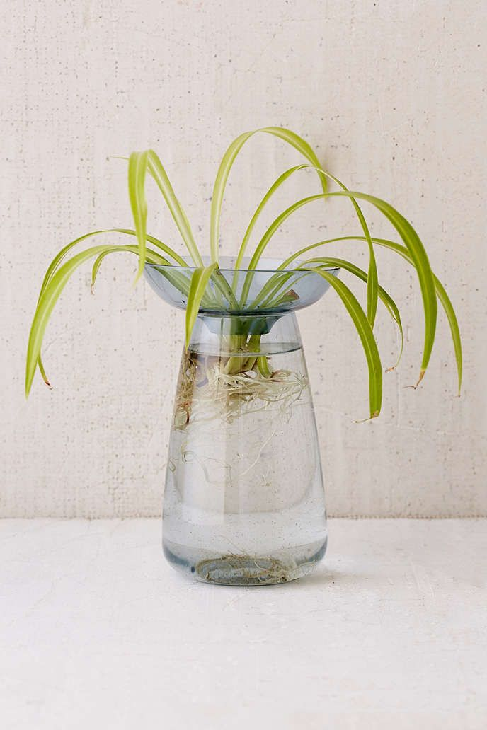 This two-part vase can be used to root herbs, bulbs, and succulents in water. The tray holds your plant up above water, leaving stems and roots submerged in the vessel below! Works especially well with hyacinth and avocado plants.