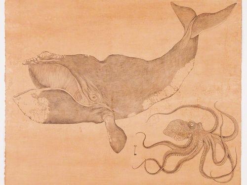 balena illustrazione - Cerca con Google