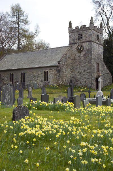 Daffodills in a churchyard, England: Building, Cottage