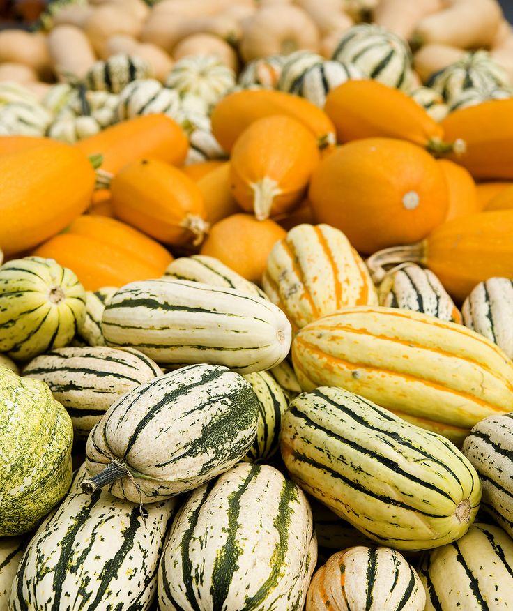 Best 25+ Squash varieties ideas on Pinterest | Winter ...