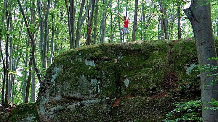 Fák, erdők, parkok. Elbi blogja: Dobogókő: Zsivány-körút