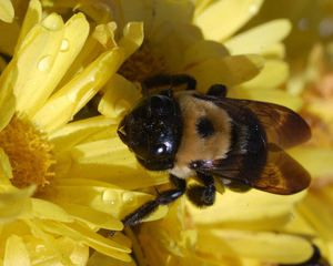 1000 ideas about Keep Bees Away on Pinterest