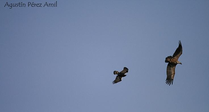 ¿Conoces nuestros talleres de identificación de Aves forestales?
