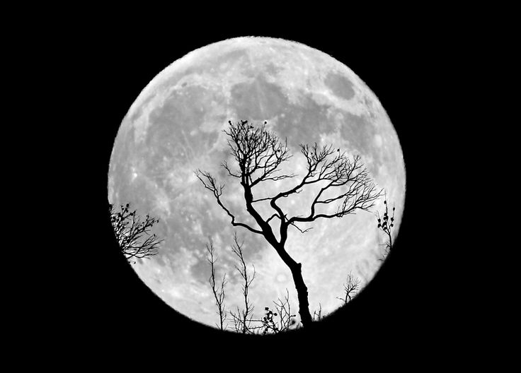 Moon * tree: Earth Moon, Photographers Chris, Chris Kotsiopoulo, Moon, Beautiful Places, Inspiration Photography, Beautiful Black, Beautiful Photography, The Moon