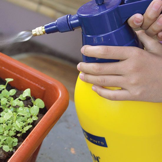 Which Homemade Insecticides Work Best? (Video) - Organic Gardening - MOTHER EARTH NEWS