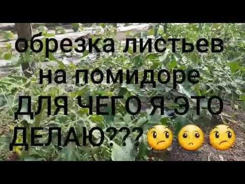 Обрезка листьев помидор. Нужно или НеНужно. Для чего я обрезаю - YouTube