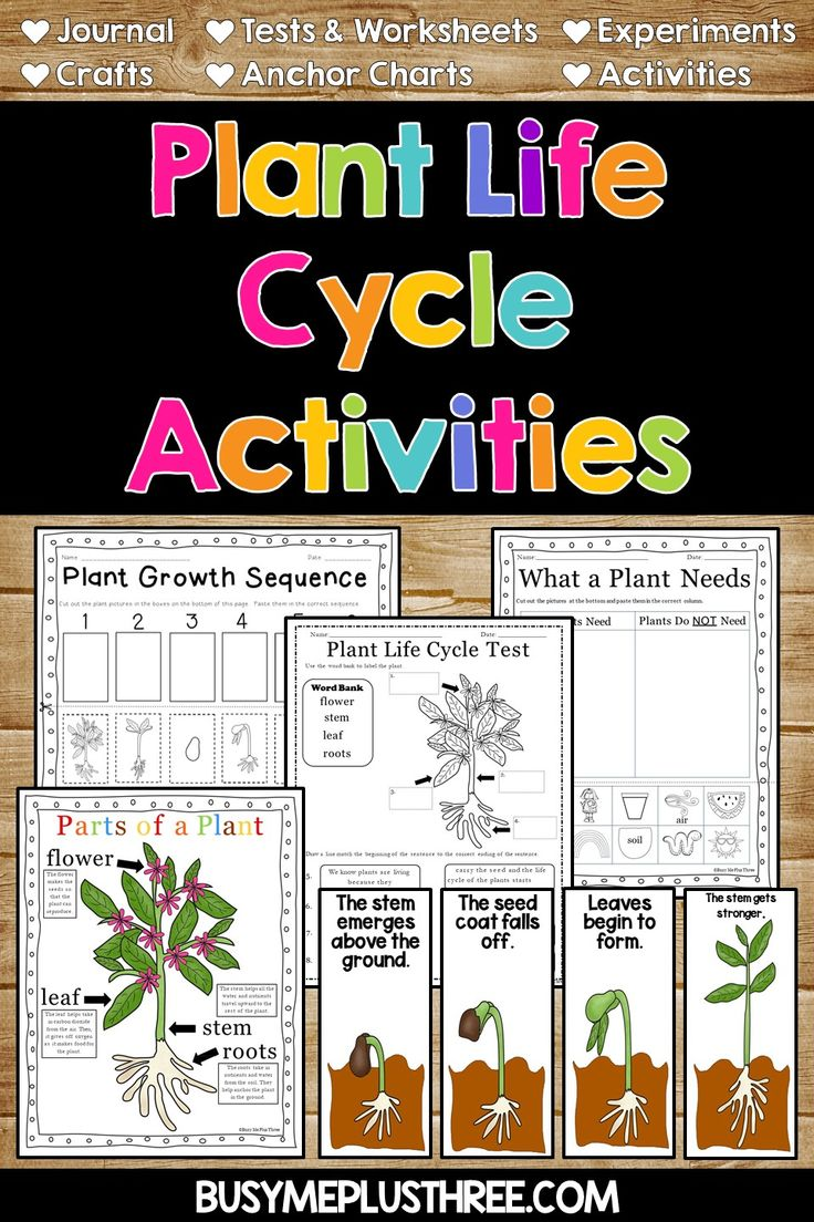 Plant Activities And Anchor Charts Plant Life Cycle Worksheet Plant Life Cycle Life Cycles [ 1104 x 736 Pixel ]