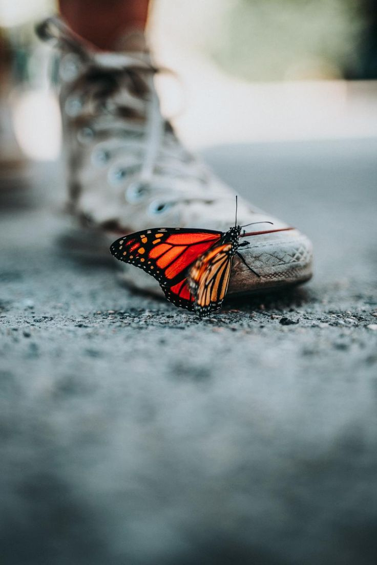 Beautiful picture of a butterfly on a very worn Converse Allstar sneakers