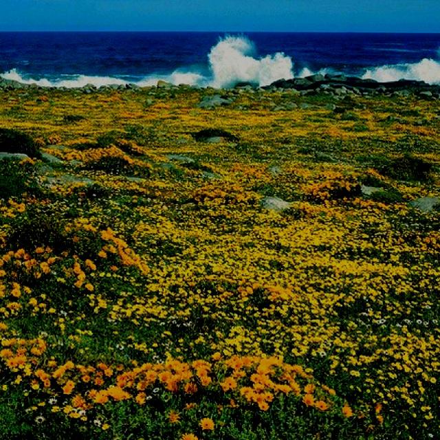 West Coast Nature Reserve - Langebaan - South Africa