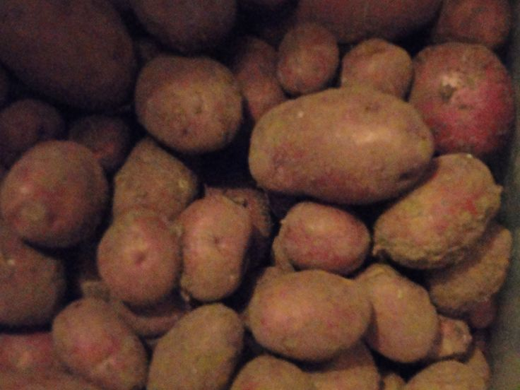 Red skin potatoes are my favorites