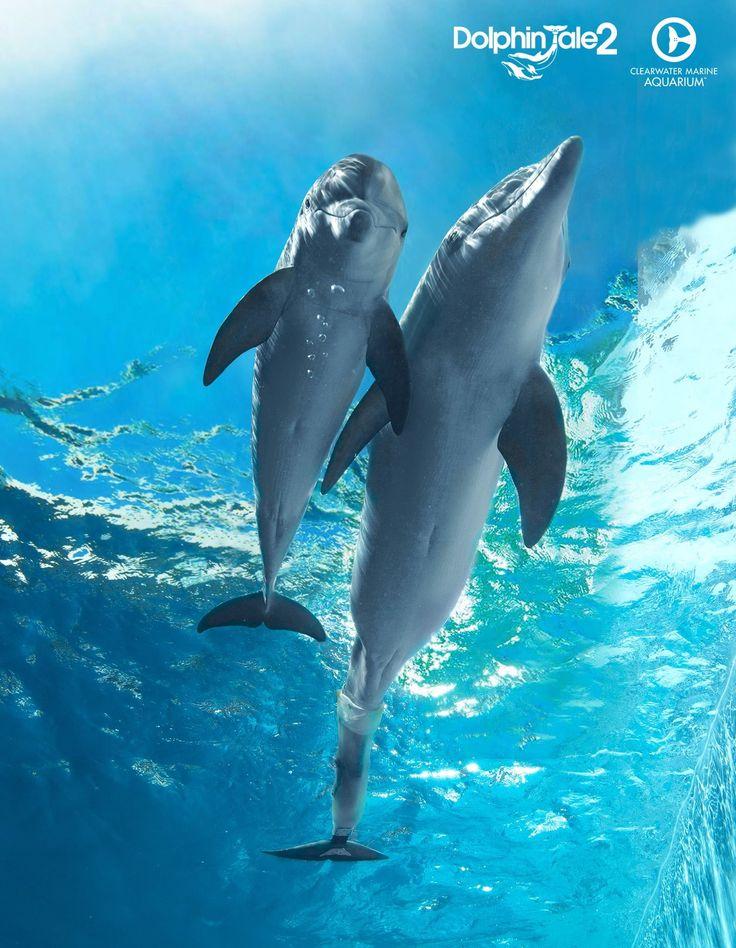 3407 best Bellas animal favorites images on Pinterest Modeling - marine biologist job description
