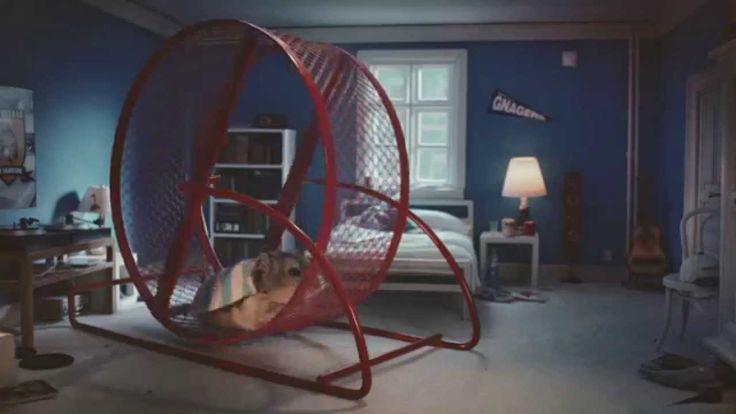 Midnight training. Hamster commercial.