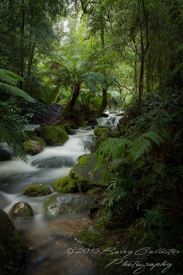 A waterfall at the Rainforest Gallery, Mt Donna Buang, Victoria, Australia