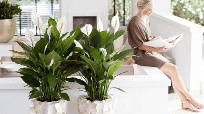 5 Bunga yang Tak Sekadar Bikin Nafasmu Segar, Tapi Juga Bebas Racun
