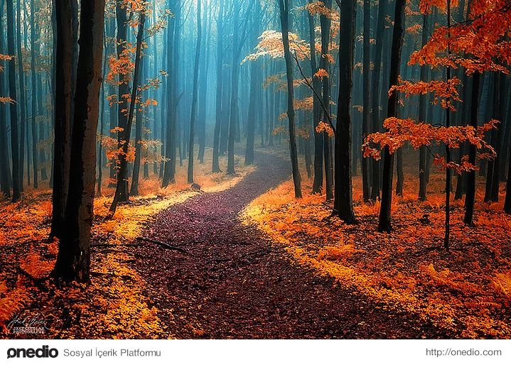 White Carpathians'da sonbahar, Çek Cumhuriyeti