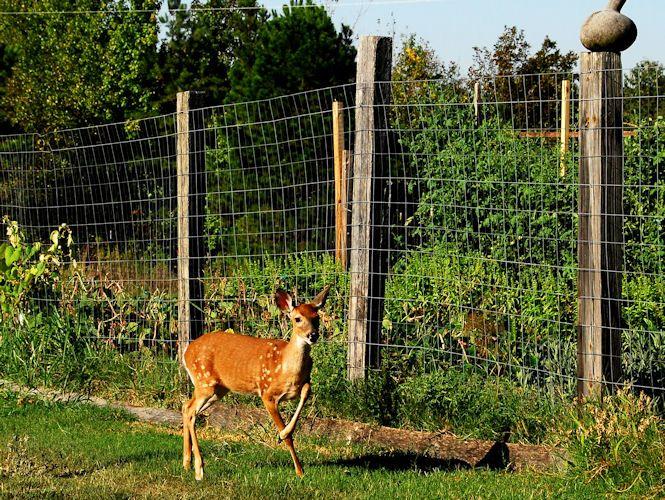 sonic deer fencing democratic underground